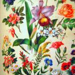 Familiar Flowering Plants – Quiz