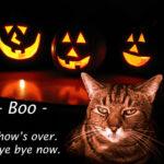 cat-boo